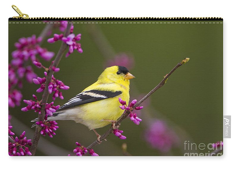 American Goldfinch Carry-all Pouch featuring the photograph American Goldfinch In Redbud by Marie Read