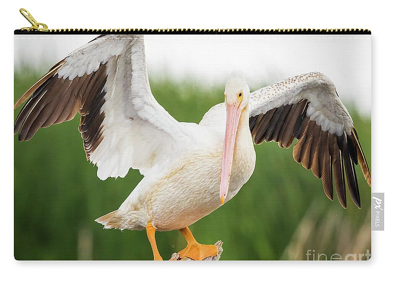 Canon Carry-all Pouch featuring the photograph American White Pelican by Ricky L Jones