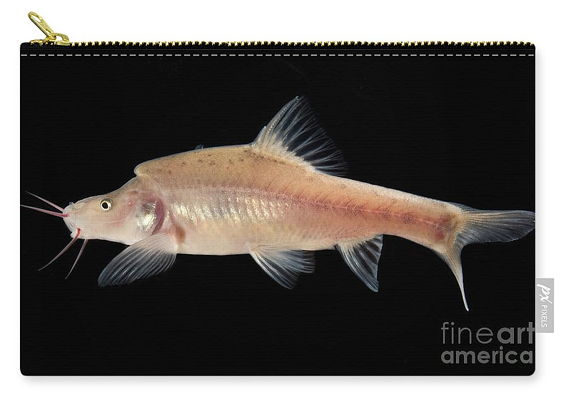 Angled Golden Line Barbel Carry-all Pouch featuring the photograph Angled Golden Line Barbel by Dant� Fenolio