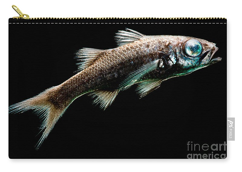 Howellidae Carry-all Pouch featuring the photograph Atlantic Pelagic Basslet by Dant� Fenolio