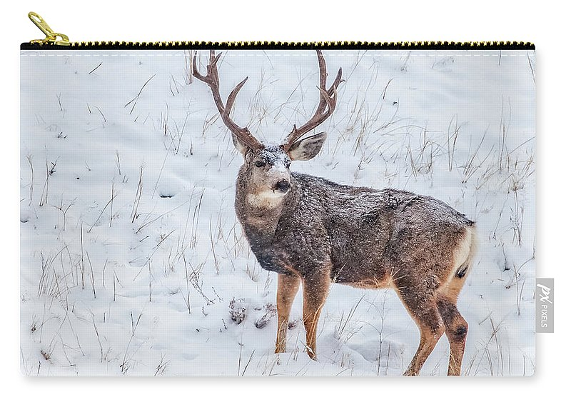 Deer Carry-all Pouch featuring the photograph Atypical Buck by Darren White
