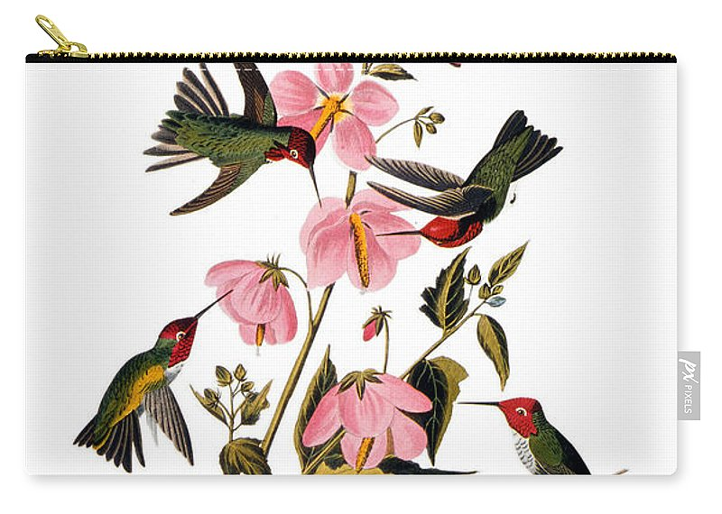 1838 Carry-all Pouch featuring the photograph Audubon: Hummingbird by Granger
