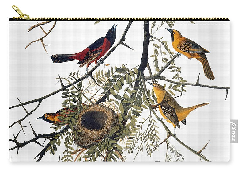 1838 Carry-all Pouch featuring the photograph Audubon: Oriole by Granger
