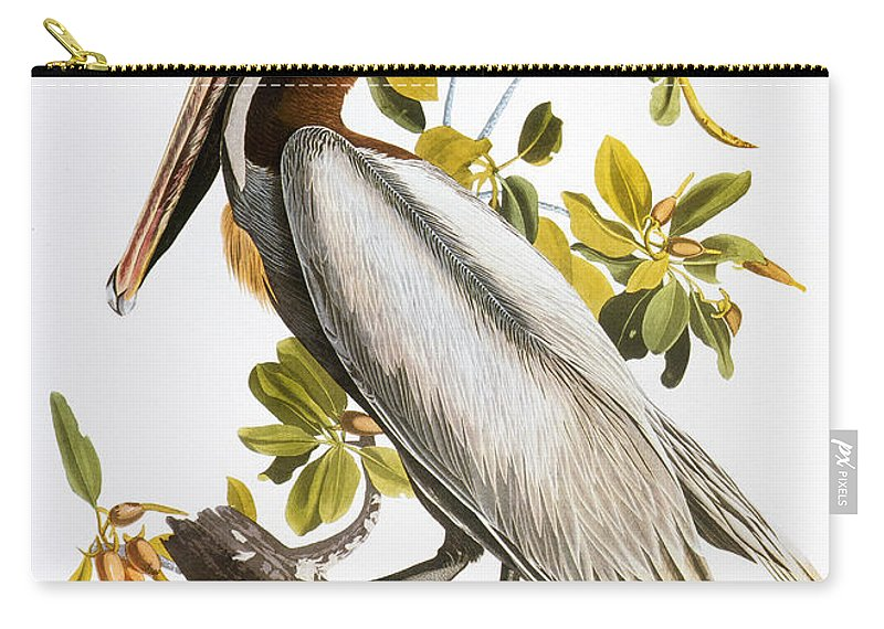 1838 Carry-all Pouch featuring the photograph Audubon: Pelican by Granger