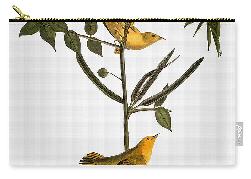 1827 Carry-all Pouch featuring the photograph Audubon: Warbler, 1827-38 by Granger