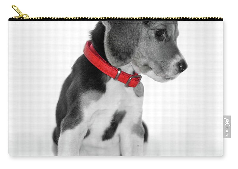 Beagle Carry-all Pouch featuring the photograph Beagle by Sergio Nevado