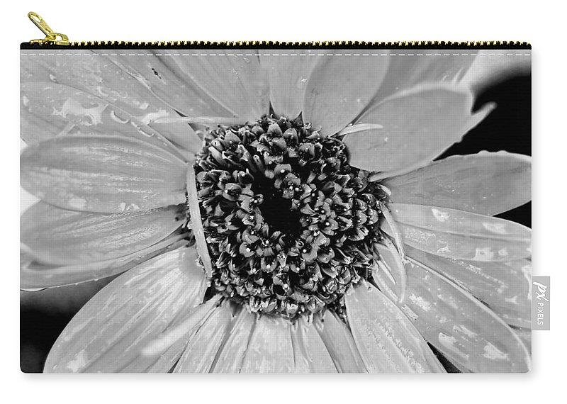 Gerber Daisy Carry-all Pouch featuring the photograph Black And White Gerbera Daisy by Amy Fose