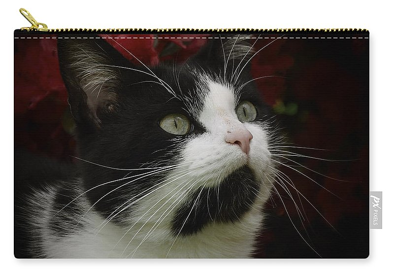 Cat Carry-all Pouch featuring the photograph Black And White Tuxedo Cat by TouTouke A Y
