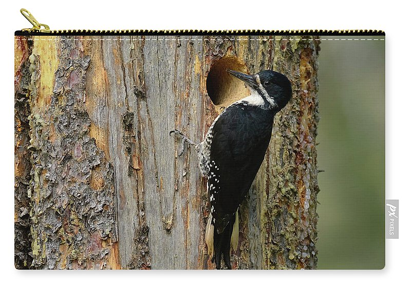 Birds Carry-all Pouch featuring the photograph Black-backed Woodpecker by Doug Herr