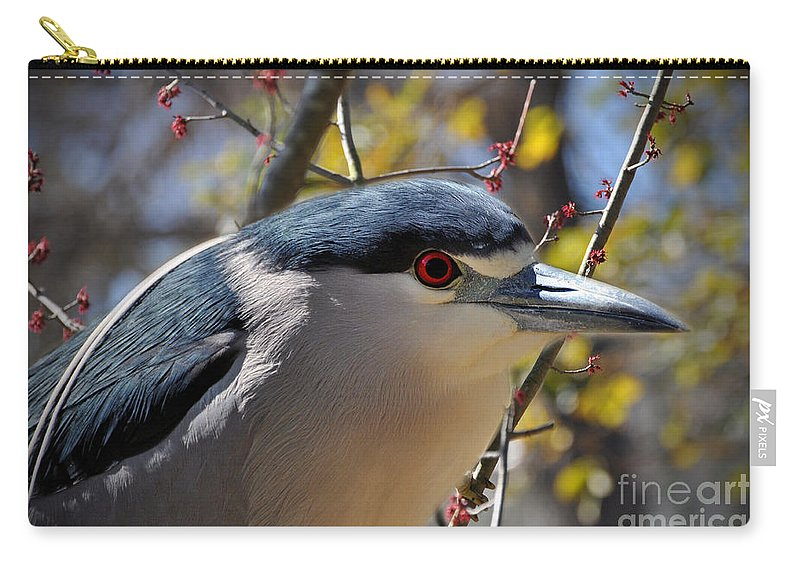 Black-crowned Carry-all Pouch featuring the photograph Black-crowned Night Heron by Savannah Gibbs
