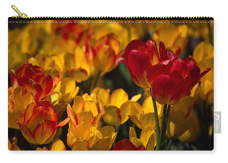 Tulip Carry-all Pouch featuring the photograph Blazing Tulips by Michele Burgess