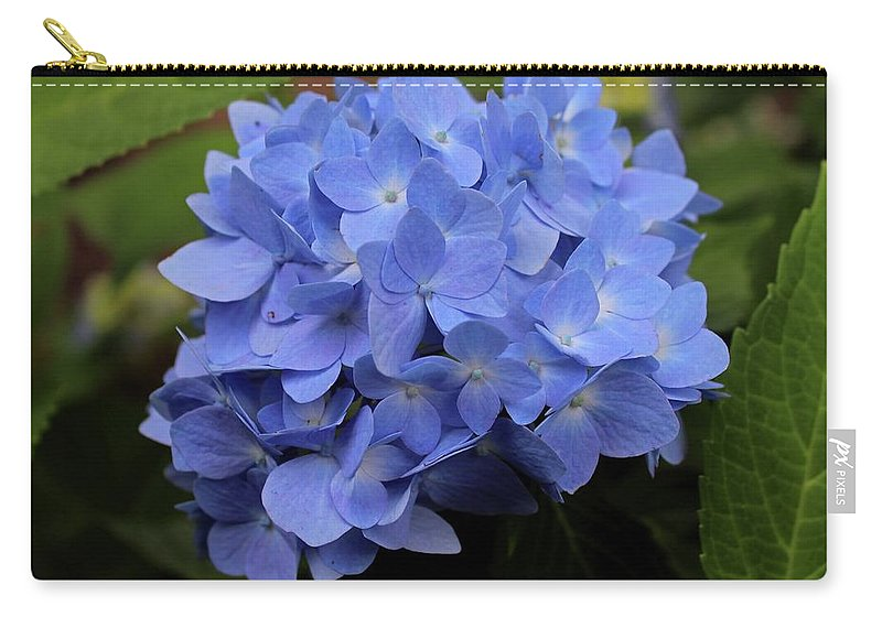 Hydrangea Carry-all Pouch featuring the photograph Blue Ballet by Michiale Schneider