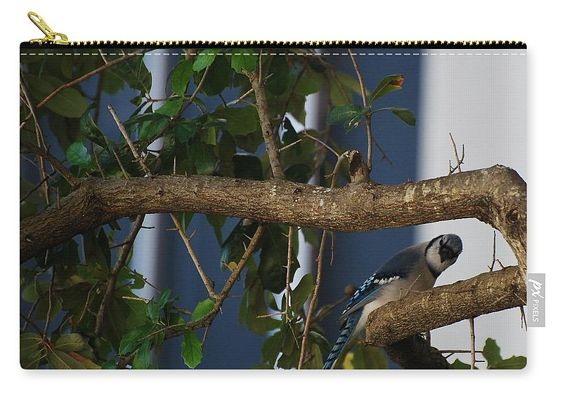 Birds Carry-all Pouch featuring the photograph Blue Bird by Rob Hans