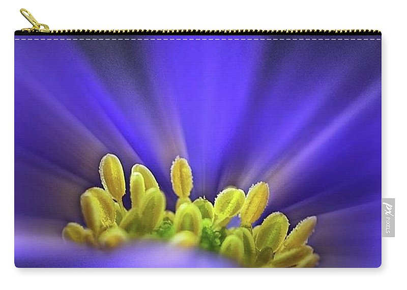 Beautiful Carry-all Pouch featuring the photograph blue Shades - An Anemone Blanda by John Edwards