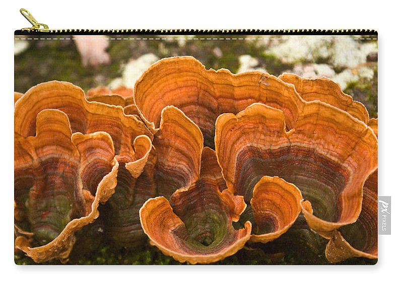 Bracket Carry-all Pouch featuring the photograph Bracket Fungi by Douglas Barnett