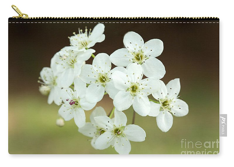 Bradford Pear White Flower Carry-all Pouch featuring the photograph Bradford Pear Flower by Iris Richardson