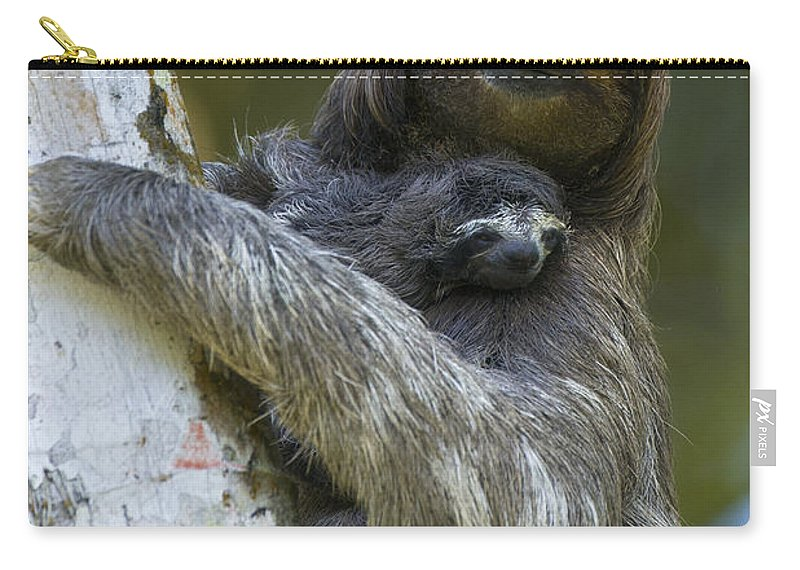 Mp Carry-all Pouch featuring the photograph Brown-throated Three-toed Sloth by Suzi Eszterhas