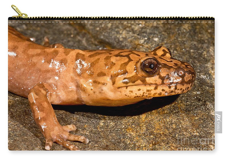 California Giant Salamander Carry-all Pouch featuring the photograph California Giant Salamander by Dant� Fenolio