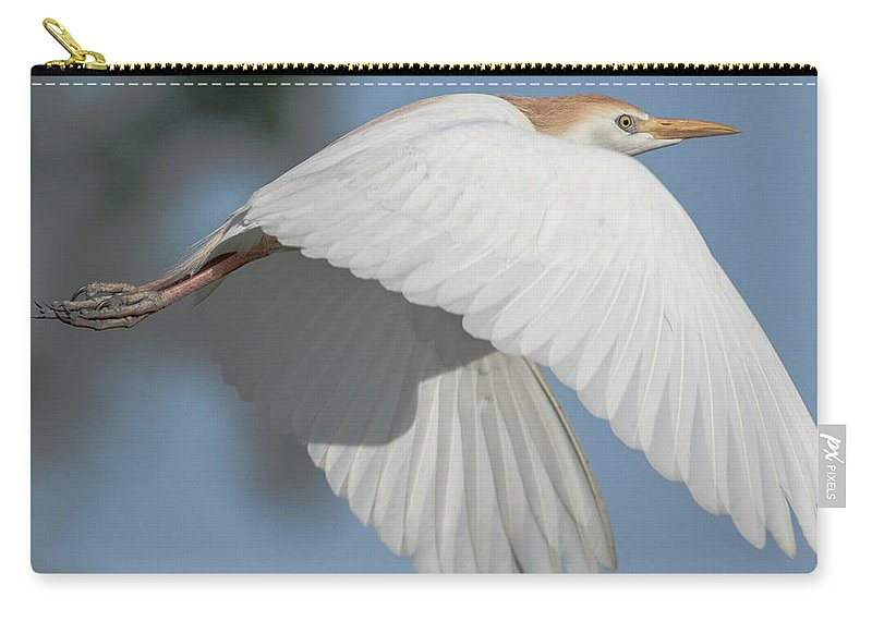 Cattle Egret Carry-all Pouch featuring the photograph Cattle Egret In Flight by Brent Bordelon