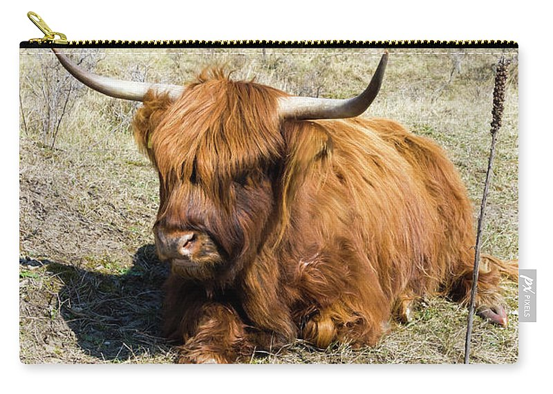 Landscape Carry-all Pouch featuring the photograph Cattle Scottish Highlanders, Zuid Kennemerland, Netherlands by Tetyana Ustenko