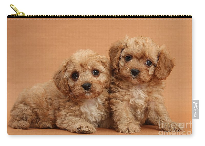Animal Carry-all Pouch featuring the photograph Cavapoo Pups by Mark Taylor