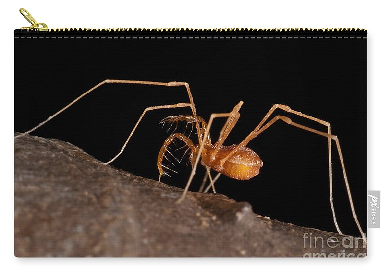 Harvestmen Carry-all Pouch featuring the photograph Cave Harvestman by Dant� Fenolio