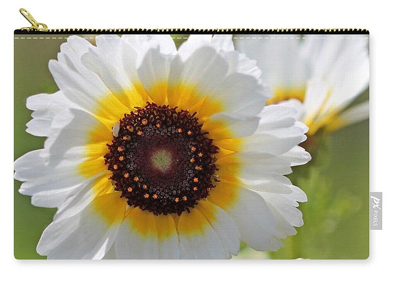 Mccombie Carry-all Pouch featuring the photograph Chrysanthemum Named Polar Star by J McCombie