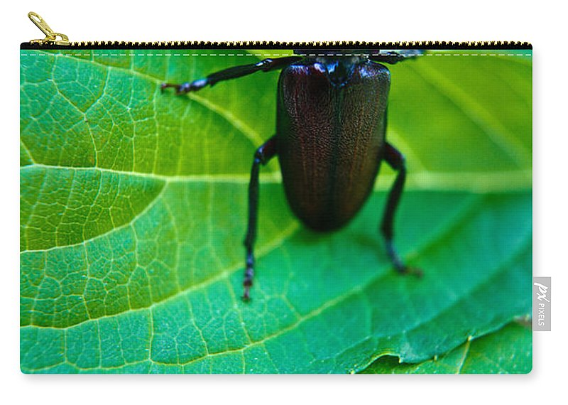 Climbing Carry-all Pouch featuring the photograph Climbing Beetle by Douglas Barnett