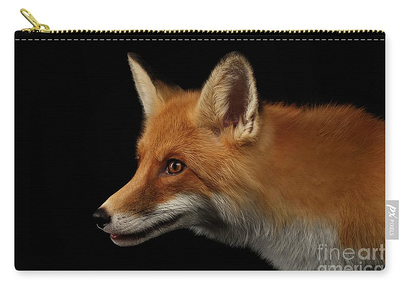 Fox Carry-all Pouch featuring the photograph Closeup Portrait of Red Fox in Profile Isolated on black by Sergey Taran