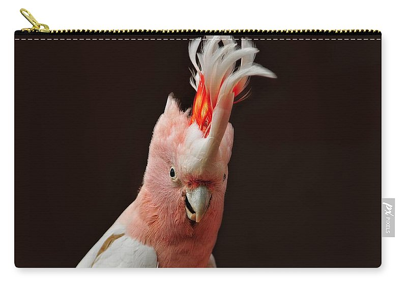 Cockatoo Carry-all Pouch featuring the photograph Cockatoo by FL collection