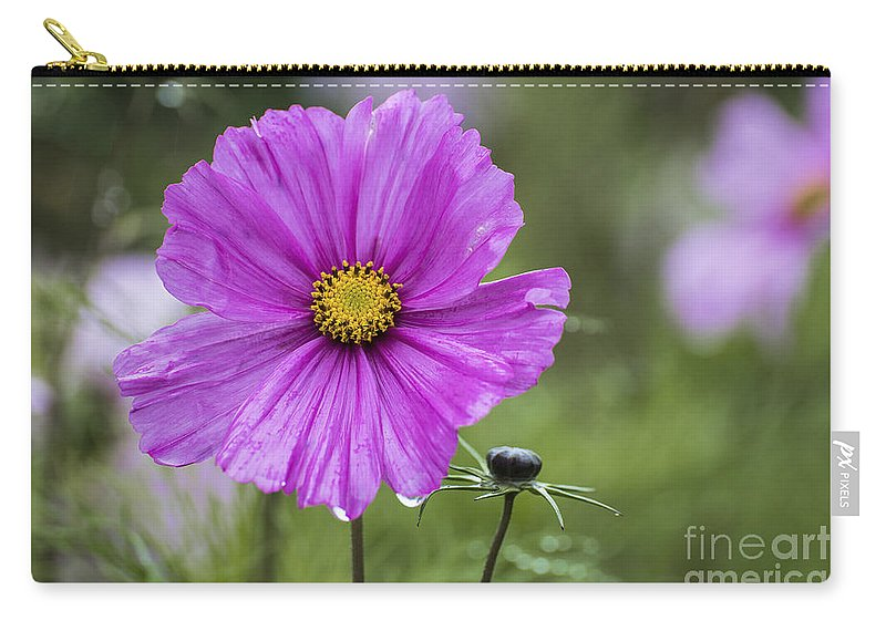 Cosmos Bipinnatus Carry-all Pouch featuring the photograph Cosmos Flower by Sebastien Coell