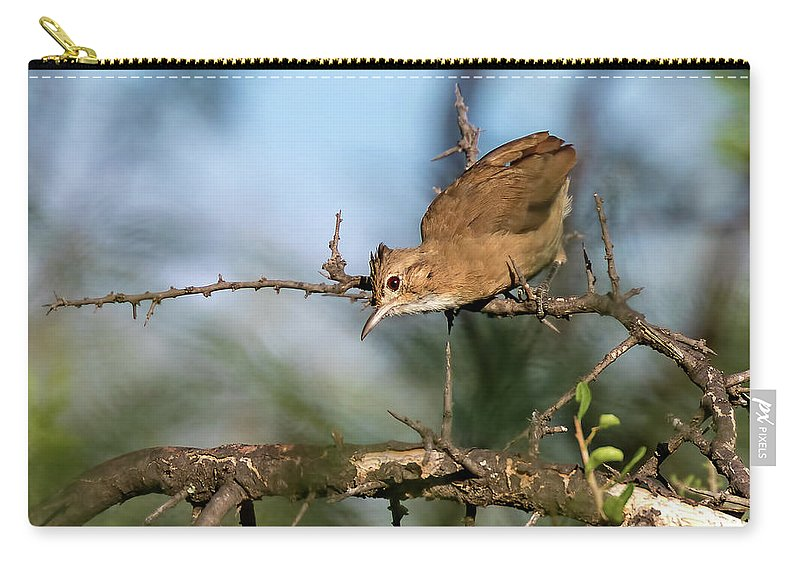Bird Carry-all Pouch featuring the photograph Crested Hornero by Pablo Rodriguez Merkel