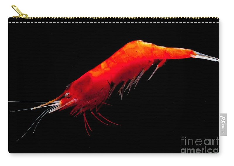 Caridea Carry-all Pouch featuring the photograph Deep Water Shrimp by Dant� Fenolio