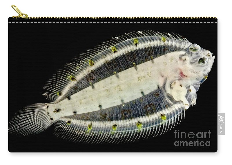 Pleuronectiformes Carry-all Pouch featuring the photograph Deepwater Dab by Dant� Fenolio