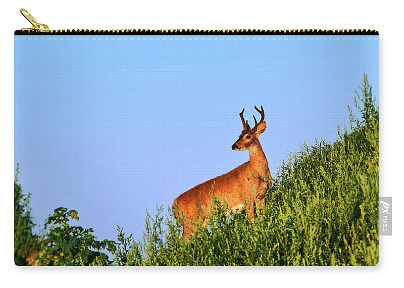 Odocoileus Virginianus Carry-all Pouch featuring the photograph Deer Buck. by John Greim