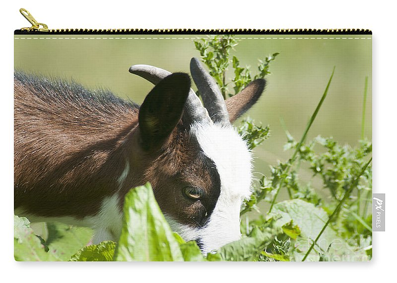 Domestic Carry-all Pouch featuring the photograph Domestic Pygmy Goat by Ilan Rosen