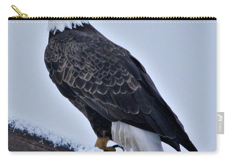 Adult Eagle Carry-all Pouch featuring the photograph Eagle by John Adams