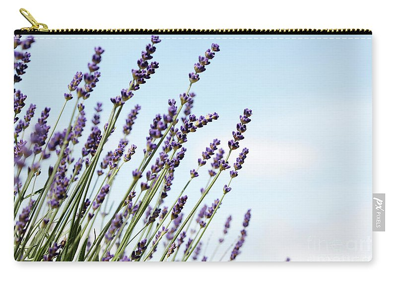 Lavendula Augustifolia Carry-all Pouch featuring the photograph English Lavender by Neil Overy