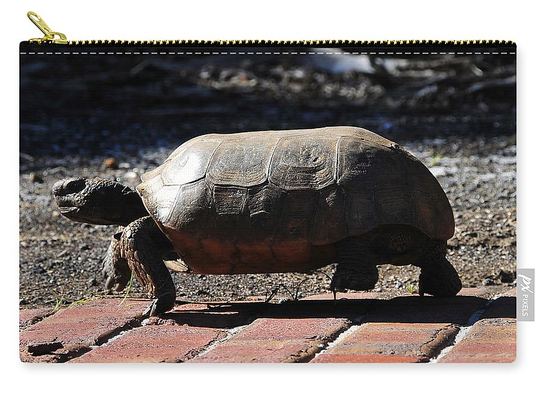 Gopher Tortoise Carry-all Pouch featuring the photograph Florida Gopher Tortoise by David Lee Thompson