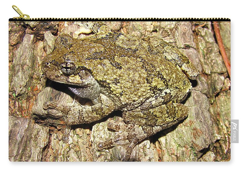 Western Maryland Gray Tree Frog Images Gray Tree Frog Photograph Prints Arborial Amphibian Prints Appalachian Mountain Forest Biodiversity Ecology Biology Nature Images Carry-all Pouch featuring the photograph Gray Tree Frog by Joshua Bales