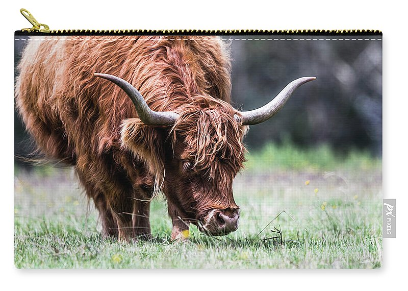 Highland Cows Carry-all Pouch featuring the photograph Grazing by Katrina Martlew