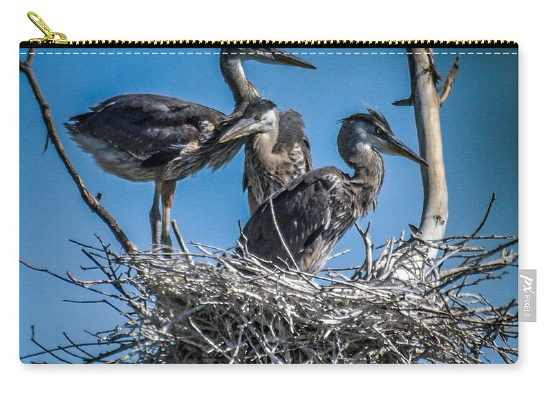 Heron Carry-all Pouch featuring the photograph Great Blue Heron On Nest by Ronald Grogan