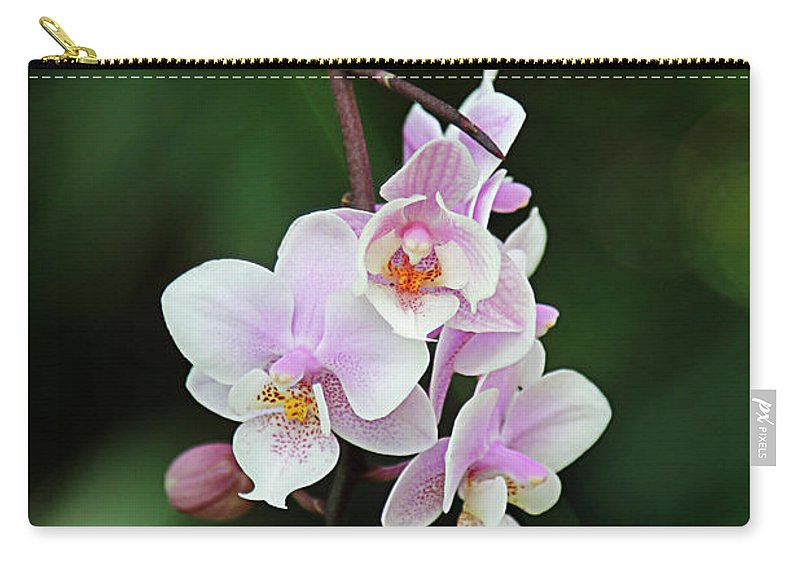 Hang Carry-all Pouch featuring the photograph Hanging by Margie Hurwich