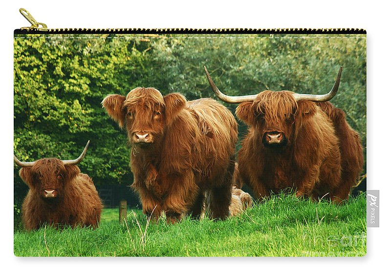 Cow Carry-all Pouch featuring the photograph Highland Cattle by Angel Ciesniarska