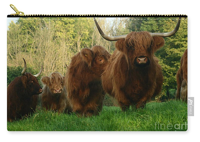 Cow Carry-all Pouch featuring the photograph Highland Cows by Angel Ciesniarska