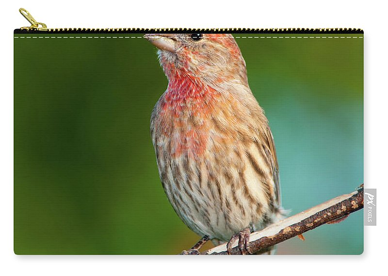 House Finch Carry-all Pouch featuring the photograph House Finch by Betty LaRue