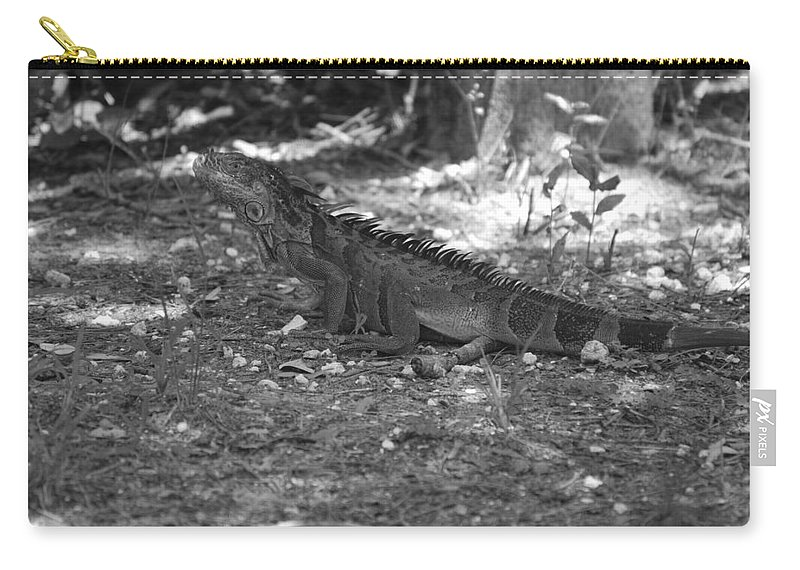 Black And White Carry-all Pouch featuring the photograph I Iguana by Rob Hans