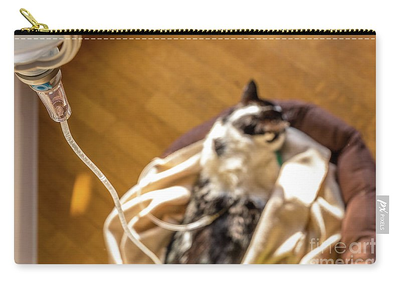 Veterinarian Carry-all Pouch featuring the photograph Intravenous Drip Cat by Benny Marty