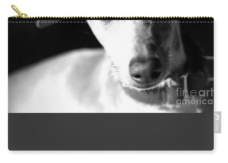 Editorial Carry-all Pouch featuring the photograph Italian Greyhound Portrait In Black And White by Angela Rath