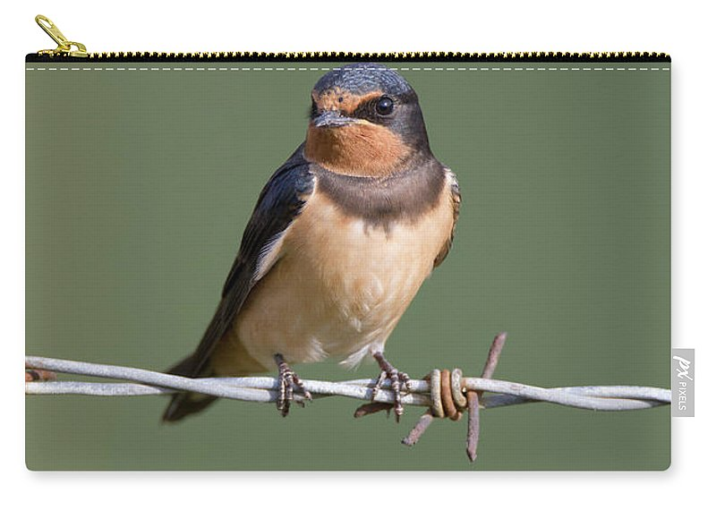 Barn Carry-all Pouch featuring the photograph Juvenile Barn Swallow by Peter Walkden